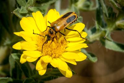 Beetle on wildflower