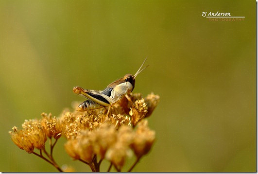 Grasshopper-Edit