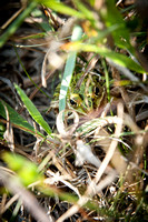 Frog in the grass 2